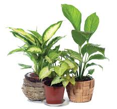 good inside plants what type of water is best for your indoor plants