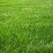 concimazione tappeto erboso concimazione prato concime come concimare il prato