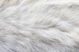 tappeti di pelliccia tappeto pelliccia bianco idee per la casa