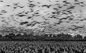 Black And White Photography Black And White Photography By Cohen 6 Fubiz Media