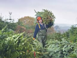 christmas tree shop stockeld park near leeds york u0026 harrogate