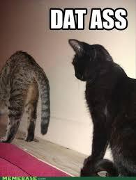Dat Ass Cat Meme - the funniest dat ass pictures 40 pics