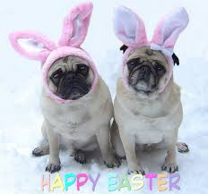 Funny Easter Memes - pug love photos of pugs images cute pug easter bunnies wallpaper