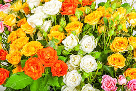 defocus big bunch of beautiful flowers a lot of multicolored