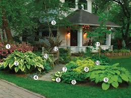 plants for the front yard