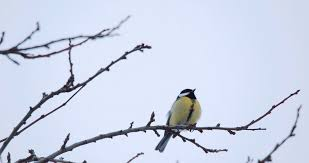 snow covered tree winter birds flying into branches hd 6649 stock