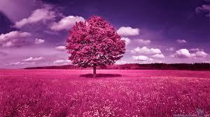 track and field pink tree 399559 jpg 1920 1080 purple
