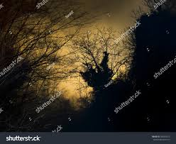 spooky background images wild woods night background spooky shapes stock photo 366592412