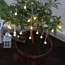 Best Solar String Lights by Lighting Find Best Season Products Online At Wunderstore