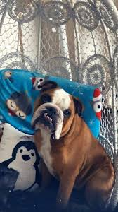 Gallery The Times Cutest Pets of Winter 2018 Contest