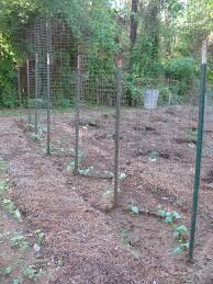 sensible survival survival gardening build a zigzag bean trellis