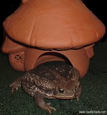 How To Get Rid Of Cane Toads In Backyard Toadily Toads Article How To Attract A Toad To Your Garden Toads