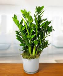 houseplants houseplant appreciation day the benefits of houseplants currans
