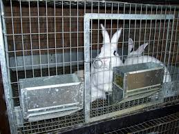 how to build commercial rabbit cages u2014 steveb interior
