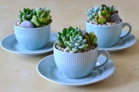 10 succulent decorating ideas