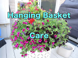 hanging basket care how to maintain your hanging baskets