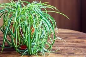 plante verte dans une chambre 11 plantes vertes dans la chambre contre les troubles du sommeil