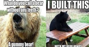 Funny Bear Memes - funny bear puns u1 jpg 1024 536 punniest puns pinterest memes