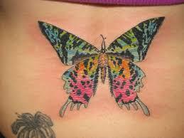 moth by dummdumm on deviantart