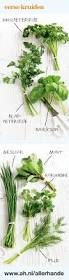 55 best herb posters images on pinterest kitchen fresh herbs