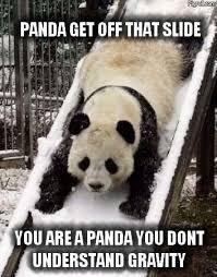 Funny Panda Memes - panda memes and funny panda pictures pigroll com