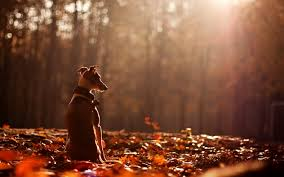 Cute Fall Wallpaper by Cute Dog Animal Alone Forest Autumn Wallpaper 3840x2400 680566