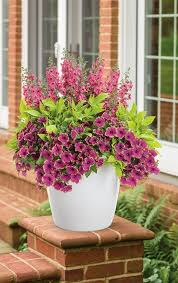 Flowering Patio Plants 1671 Best Container Gardening Ideas Images On Pinterest