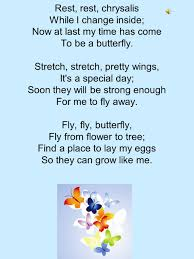 butterfly cycle by suzy gazlay hatch hatch egg i m so