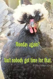 Hen Meme - flock focus friday 8 16 13 the chicken chick