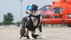 traverse city airport dog piper is coolest dog in michigan