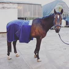 review bucas recuptex therapy rug u2013 that grumpy horse