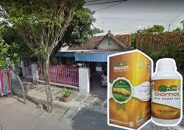 jual jual beli penirium asli import mamapuas pw jual agen www