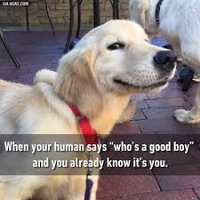 Golden Retriever Meme - are memes actually funny non ski gabber newschoolers com