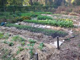 Growing Your Own Vegetable Garden by How To Start A Vegetable Garden From Scratch Rebel Health Tribe
