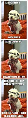 Hipster Dog Meme - list of synonyms and antonyms of the word hipster dog meme