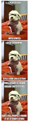 Hipster Dog Meme - best of hipster dog meme 146 s