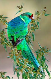 parrots in paradise kealakekua hawaii exotic bird 480 best attractions images on pinterest beautiful places places