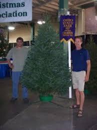 octa news ohio christmas tree association