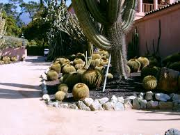 types of cactus for the garden using cactus landscaping