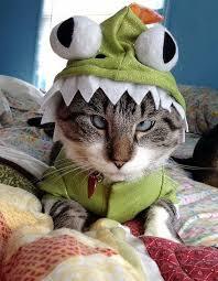 Kitten Halloween Costumes Pet Pets Halloween Costumes