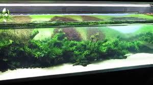 Aquascape Takashi Amano Forests Underwater