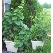 Container Vegetable Gardening Ideas Best Container Vegetable Garden Ideas Pictures Coexist Decors