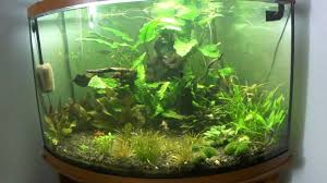 aquarium design exle our 30 gallon glass corner planted aquarium youtube