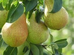 edibles fruits easy to grow edibles monrovia