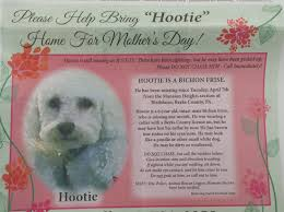 bichon frise 6 years old birdsboro woman hopes for return of her beloved dog reading