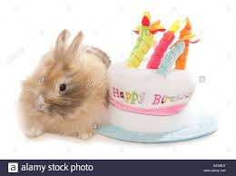 rabbit birthday happy birthday rabbit single rabbit with birthday