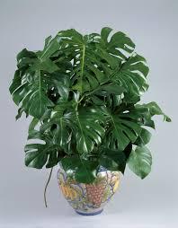 Good Desk Plants 10 Best Indoor Plants For Apartments Low Maintenance Plants For