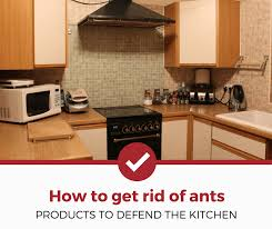 how to clean cupboards after pest best ant killers for the kitchen 2021 edition pest