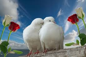doves dreams meaning interpretation and meaning