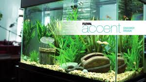 Resume Accent Fluval Accent Aquarium And Cabinet Combo Pet Supplies Pet Food